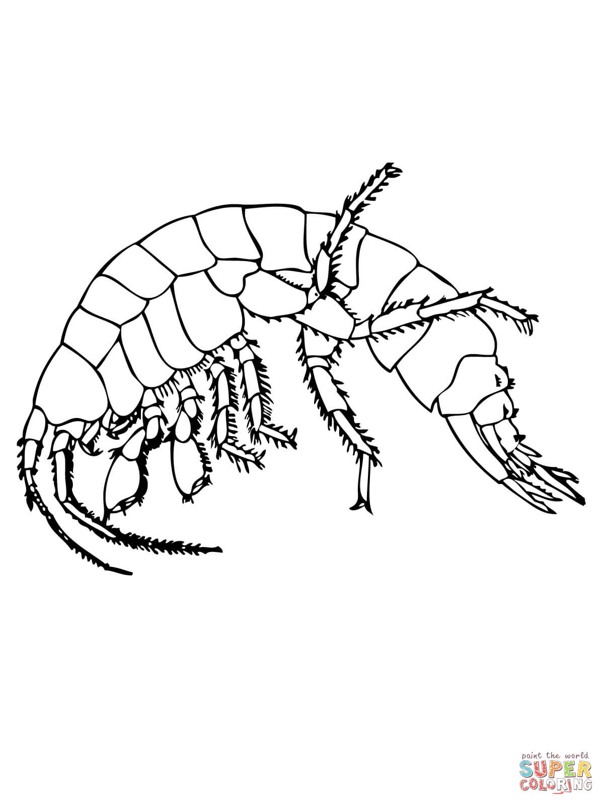 1200x1600 Shrimp Coloring Pages Free Coloring Pages