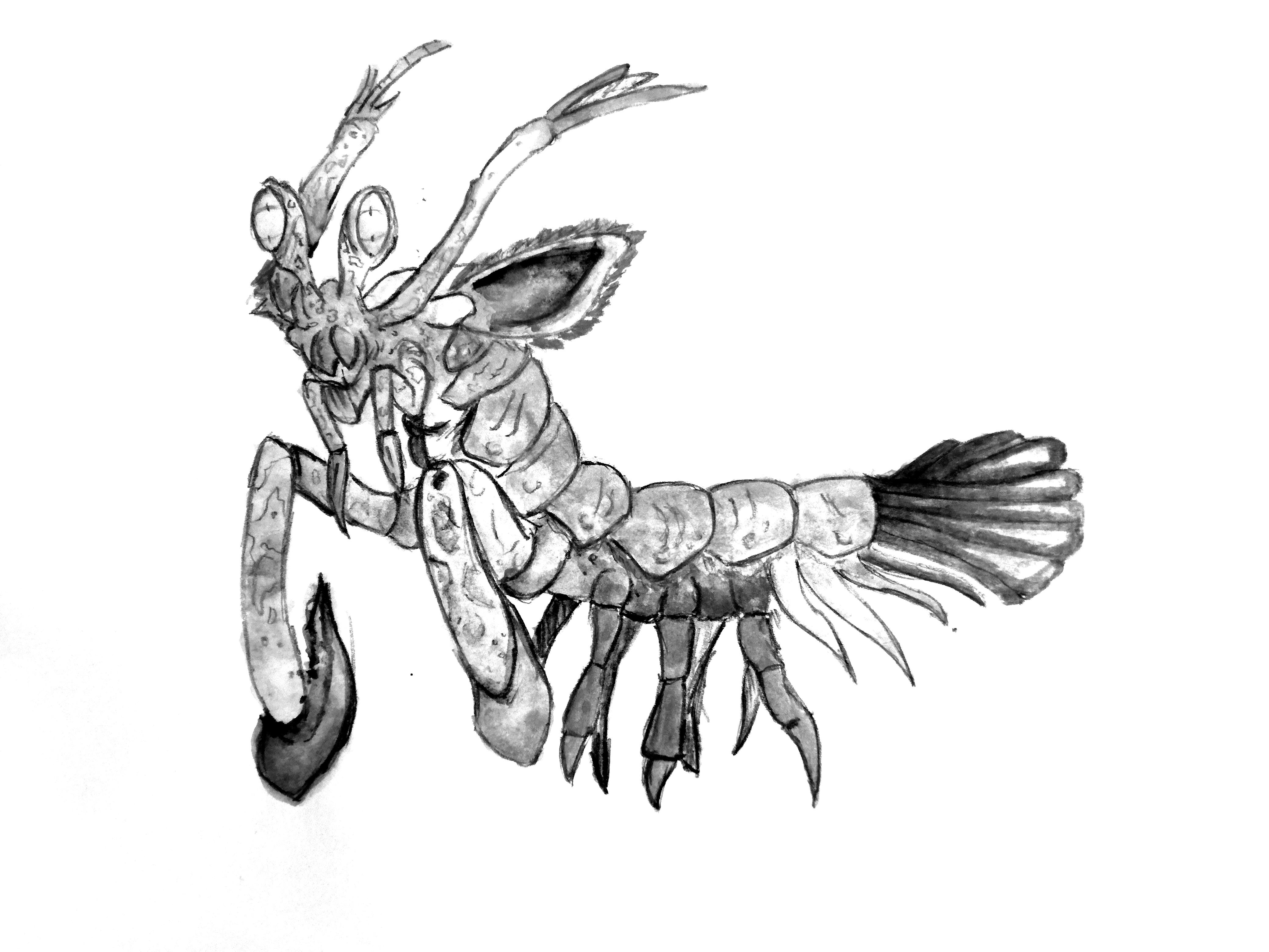 4160x3120 The Mantis Shrimp Decent Spread
