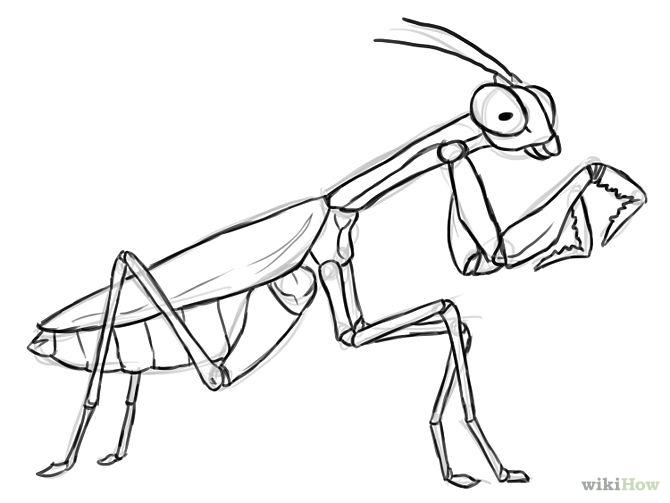 670x503 Praying Mantis Drawing