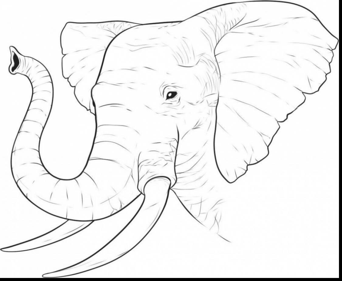 1126x925 Outstanding Elephant Face Drawing With Africa Coloring Pages