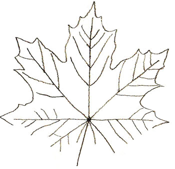 350x339 How To Draw Maple Leaves
