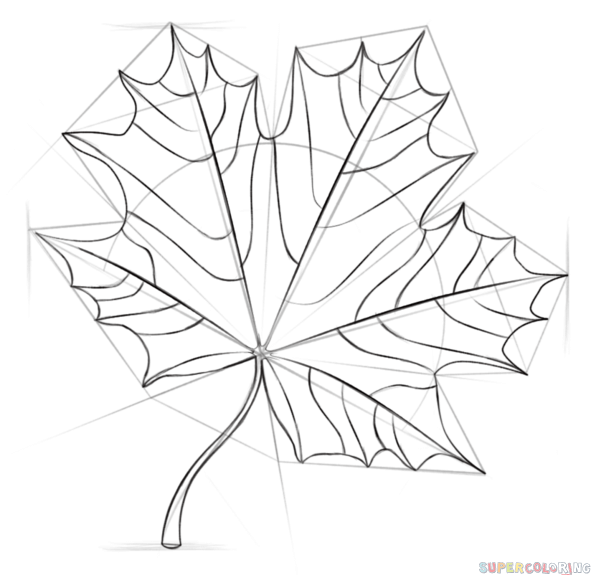 591x575 How To Draw A Maple Leaf Step By Step Drawing Tutorials