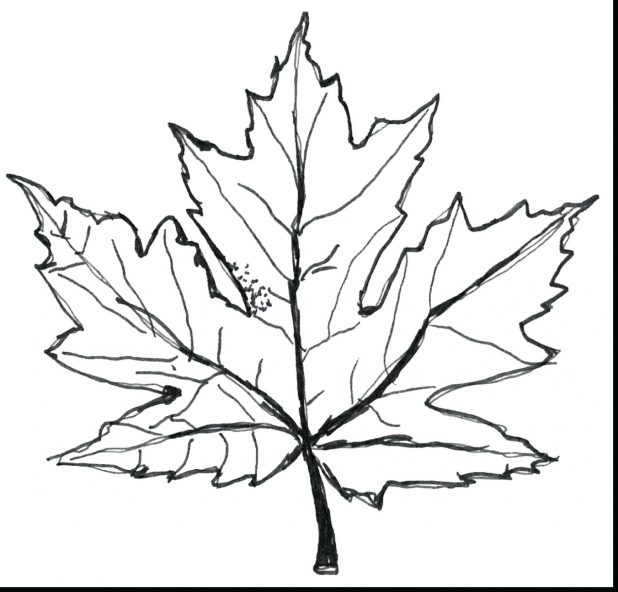 618x592 Leaf And Fall Coloring Pages Archives Leaves Page Preschool Tree