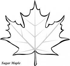 231x218 Maple Leaf Drawing Color Paints, Leaves And Diagram