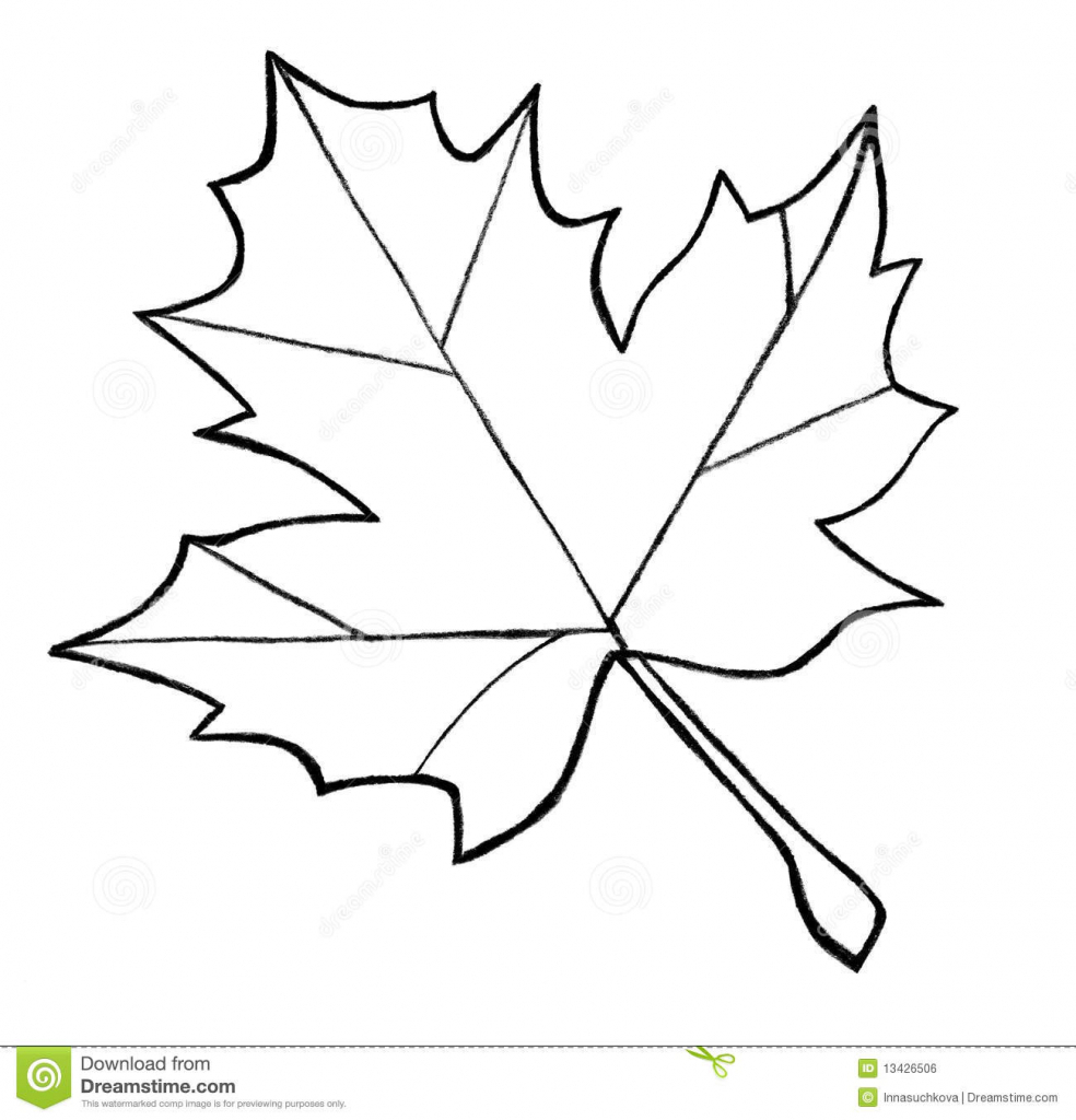 984x1024 Maple Leaf Drawing Maple Leaf Sketch Stock Images
