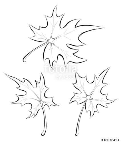 424x500 Vector Maple Leaves. Freehand Drawing. Stock Image And Royalty