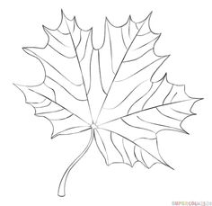 236x229 Draw A Maple Leaf Leaves, Doodles And Drawings