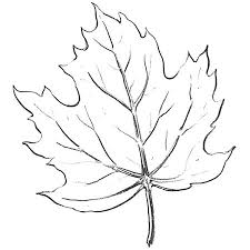 225x225 Image Result For How To Draw A Realistic Leaf Step By Step Lets