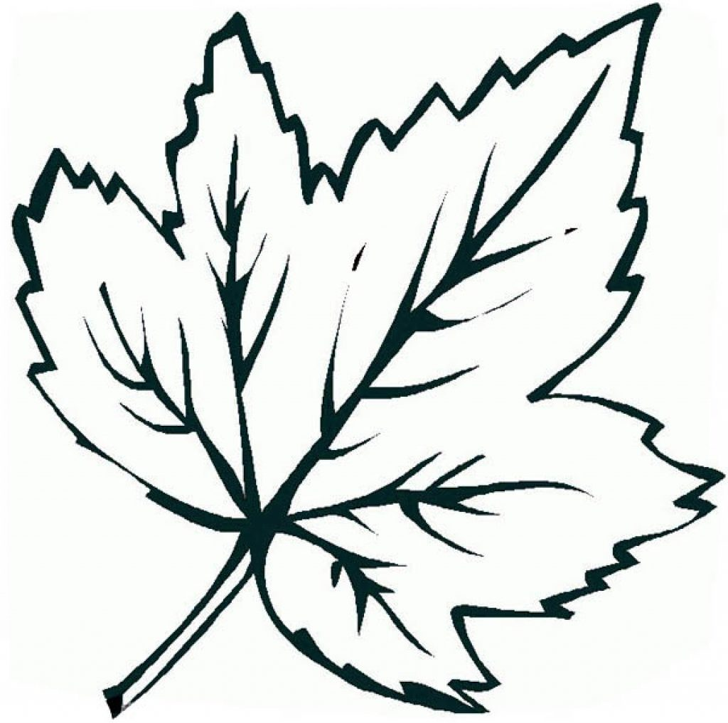 1024x1017 Maple Leaf Coloring Page Itgod Me
