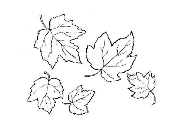 Leaf Template 1 600x429 MapleTree Bark