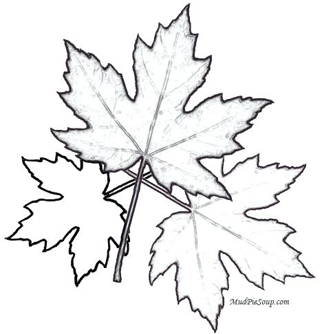 468x486 Printable Leaves Coloring Pages Maple Leaves Printable Leaf Fall