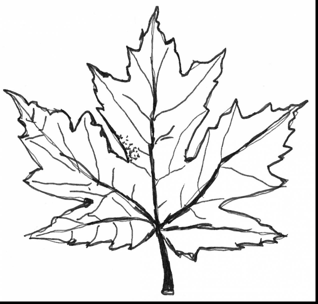 1272x1218 Impressive Maple Leaf Coloring Page With Leaf Coloring Pages