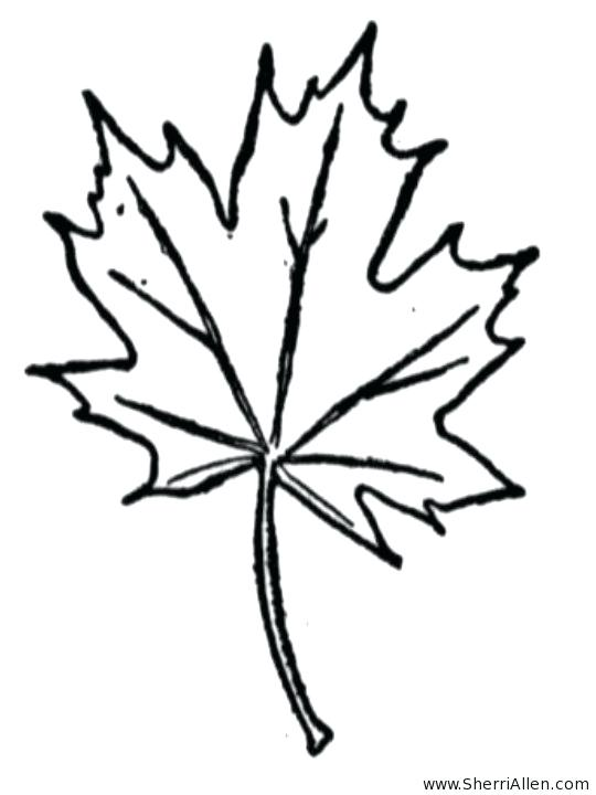 540x720 Leaf Coloring Template Fall Maple Leaf Coloring Page Leaf Coloring