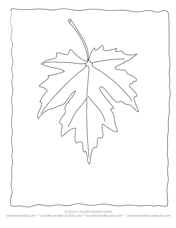 612x792 Maple Leaf Coloring Coloring Page Leaf Thanksgiving Leaves