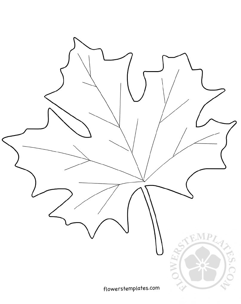 807x1017 Maple Leaf Template Coloring Page Flowers Templates