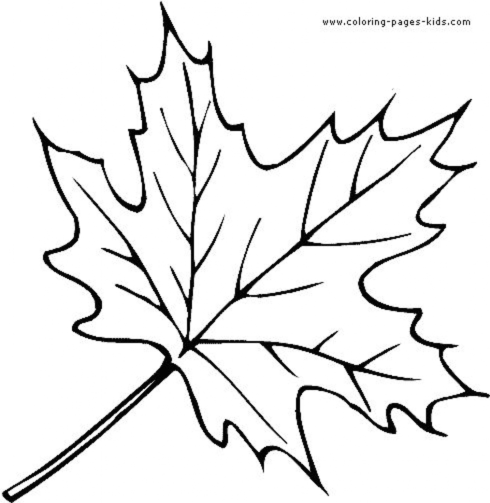 997x1024 Canada Maple Leaf Outline Rfp Response Cover Letter Examples
