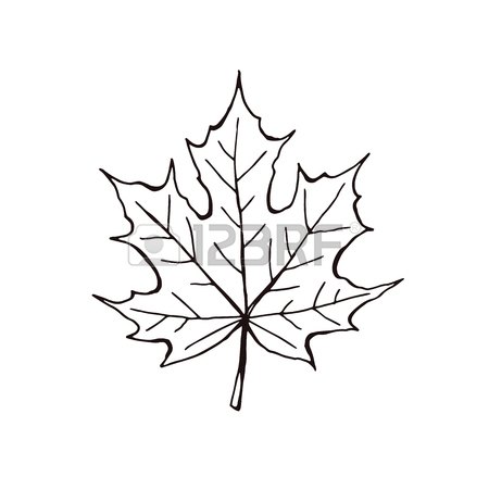 450x450 Hand Drawn Autumn Leaves Outline Collection. Maple And Oak Leaf