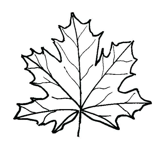560x540 Leaf Coloring Pages Maple Leaf Coloring Page Fall Autumn Coloring