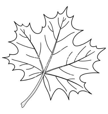 380x400 Leaf Of A Maple Contour Vector Accomplished Leaf