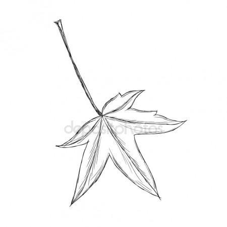450x450 Hand Drawn Maple Leaf Stock Vector Altelia