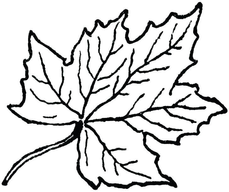 728x611 Leaves Coloring Pages Printable