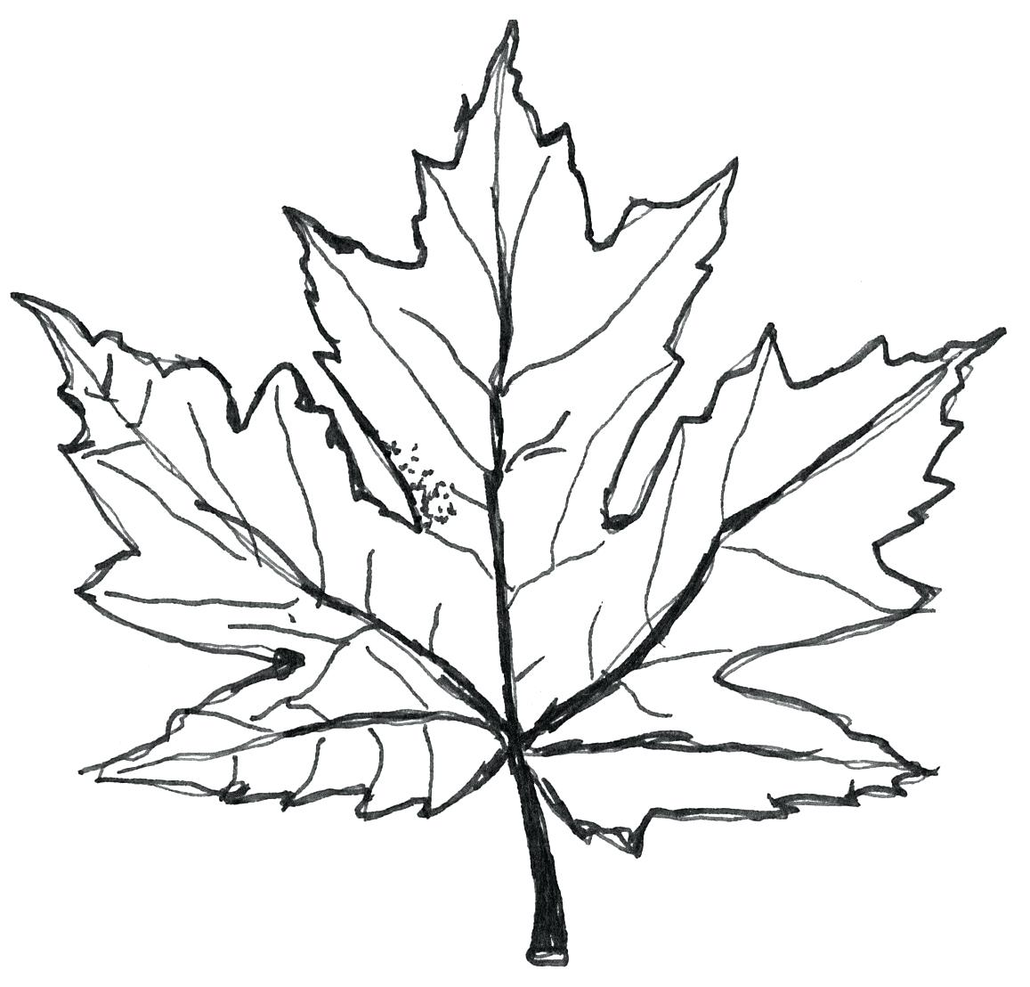 1157x1108 Printable Fall Leaves Printable Coloring Pages
