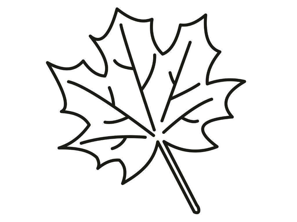 1024x768 Printable Oak Leaf Outline Printable