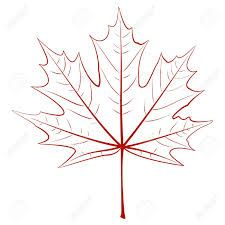 225x225 Image Result For Maple Leaf Drawing Maple Leaves