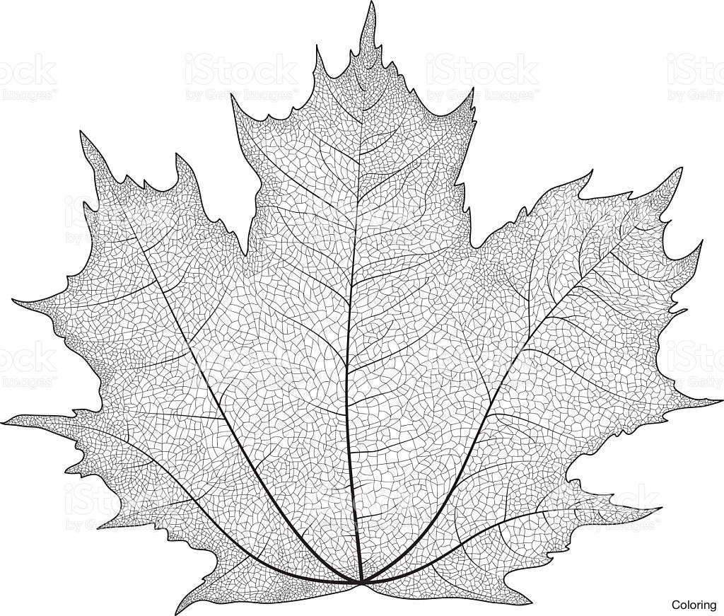 1024x871 8 Drawing Leaf Fig Applying Soft Pencil Strokes Of Leaves Coloring