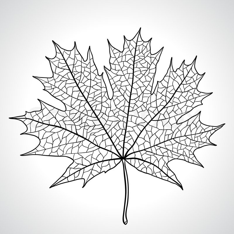 800x800 Leaf Of A Maple, Nature Symbol, Monochrome Vector Stock Vector