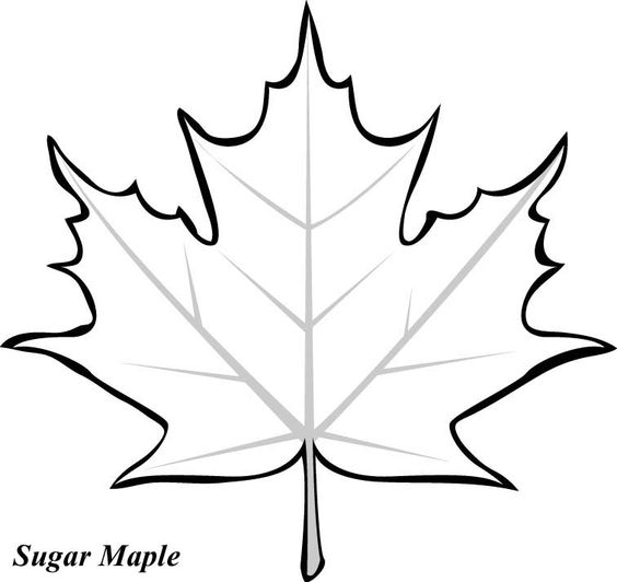 564x532 Maple Leaf Coloring Pages Leaves On Autumn