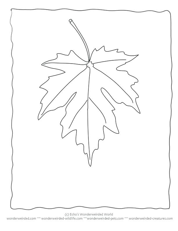 612x792 Maple Leaf Coloring Pages Maple Leaf Coloring Sheets Printable