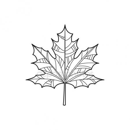 450x450 Maple Leaf Sketch. Stock Vector Lvlay