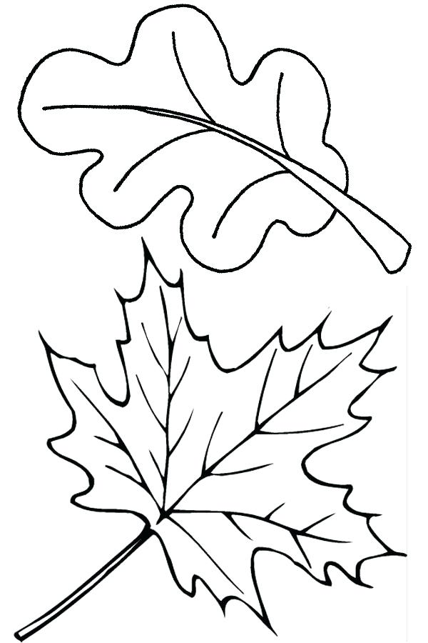 600x900 Thanksgiving Leaf Coloring Pages Best Fall Leaves Drawing Ideas