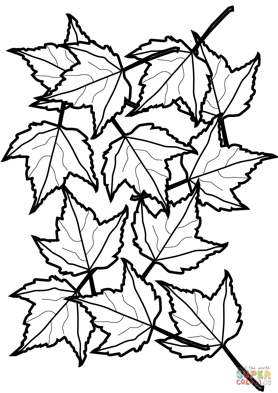 919x1300 Autumn Maple Leaves Coloring Page Free Printable Coloring Pages