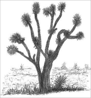 356x382 Easy Tree Sketches