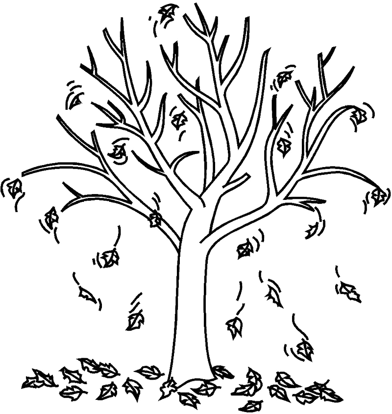 800x845 Fall Tree Coloring Pages