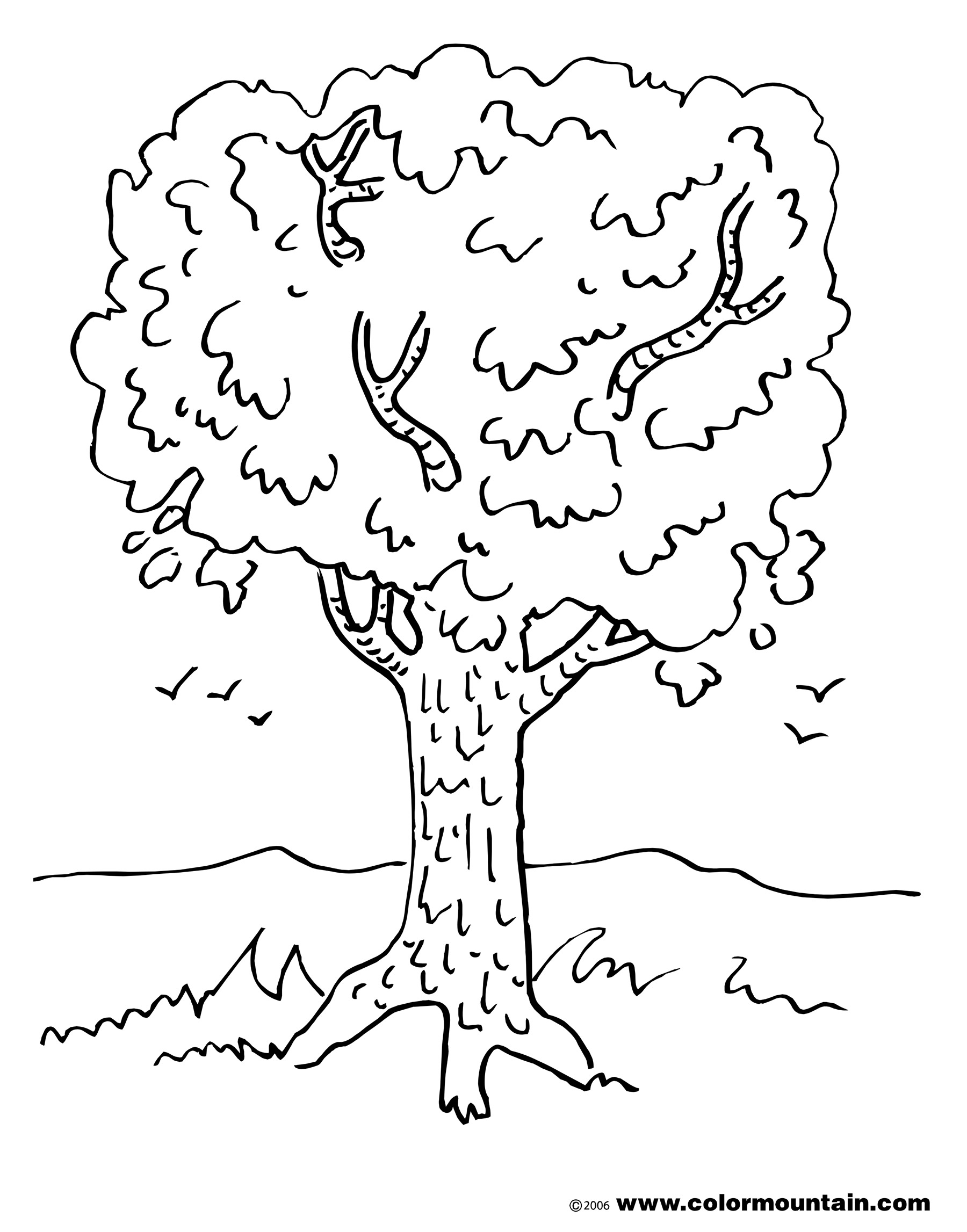 1800x2294 Maple Tree Coloring Page