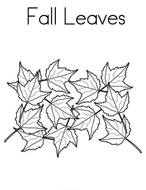 600x776 Maple Tree Fall Leaves In Fall Leaf Coloring Page