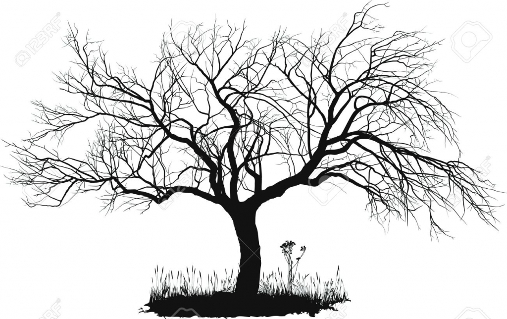 1024x644 Black And White Tree Drawing Maple Tree Black And White Clipart