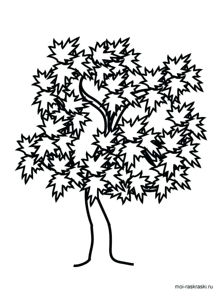 750x1000 Tree Coloring Pages Maple Tree Coloring Page Coloring Pages