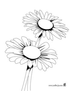 236x305 Daisy Flower Coloring Pages Texas Hill Country Wildflower