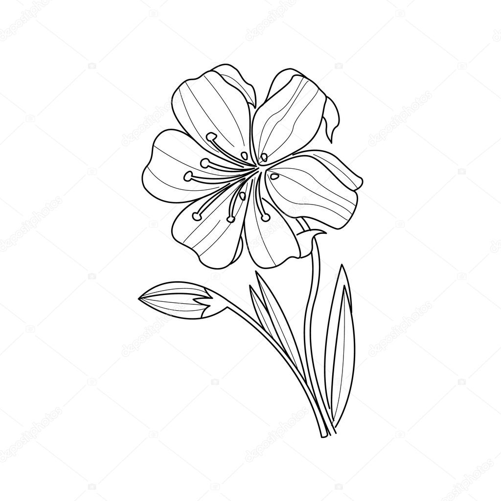 1024x1024 Marigold Flower Monochrome Drawing For Coloring Book Stock