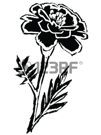 338x450 Vector Marigolds Royalty Free Cliparts, Vectors, And Stock