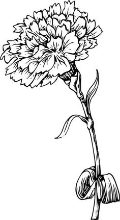236x431 Black And White Drawing Marigold Flower