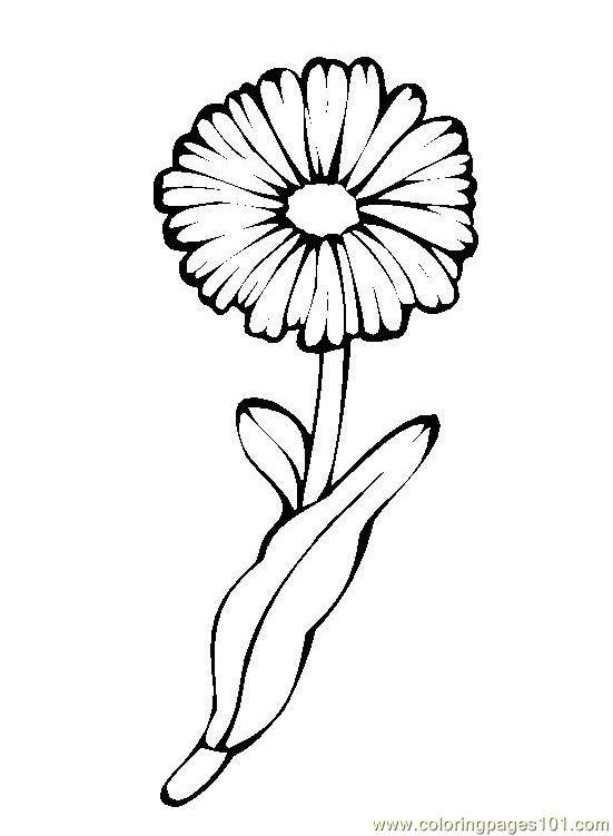 Marigold Flower Drawing at GetDrawings