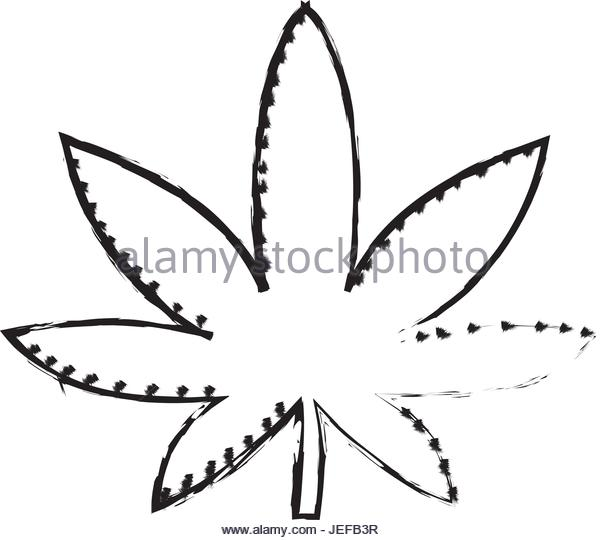 604x540 Cannabis Plant Illustration Stock Photos Amp Cannabis Plant
