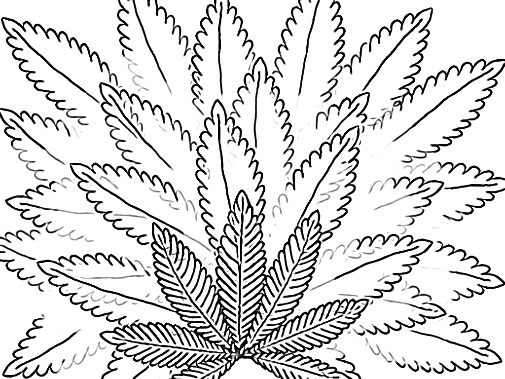 1024x768 Cannabis Coloring