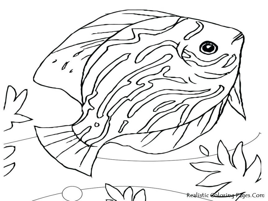 863x647 Ocean Animals Coloring Pages Sea Life Presented By Realistic
