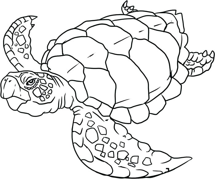 700x583 Coloring Pages Sea Animals Ocean Animals Coloring Pages Ocean